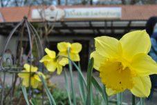 Ich weiß nicht ob man es merkt, aber der Frühling ist daaaa!