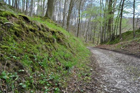 Der Weg der zum Steinbruch führt