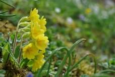 Kleine Osterblümchen