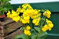 Kennt ihr diese gelben Blüten?