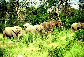 Elefantenherde bei der Mahlzeit