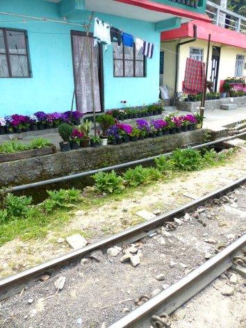 Darjeeling-2015-39