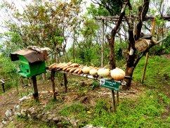 Darjeeling-2015-49