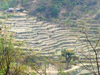 Darjeeling-2015-69