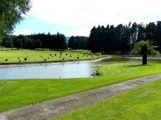 Azoren-Golf_03