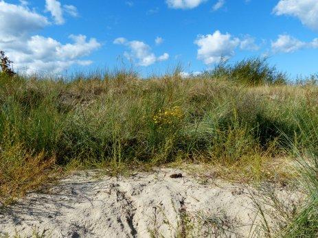 Usedom - Am Strand von Ahlbeck