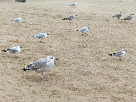 Usedom - am Strand von Swinemünde