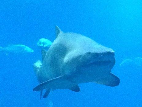 Im Aquarium von Palma