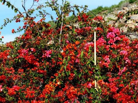 Blütenpracht in der Steinwüste