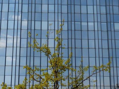 Grüne Architektur in Mitte