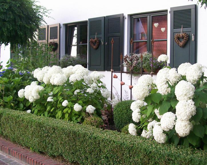 Mit Hortensien Bepflanzter Vorgarten
