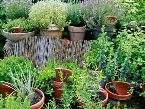 gartengestaltung kräuterbeet kräutergarten planen, anlegen und pflegen - mein schöner garten
