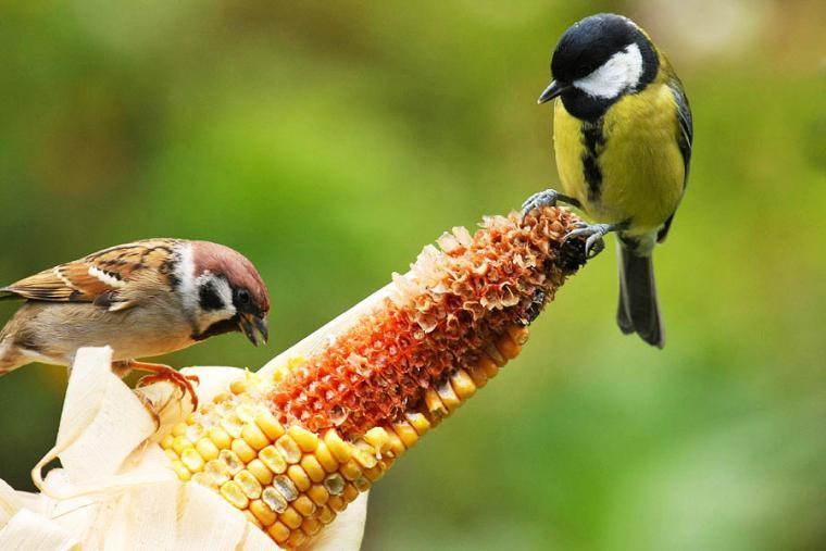 Vögel Ganzjährig Füttern Expertentipps Zum Richtigen Vogelfutter