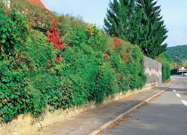 Lrmschutz im Garten  Mein schner Garten