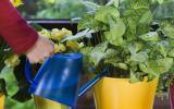 Zimmerpflanzen automatisch bewssern Mein schner Garten