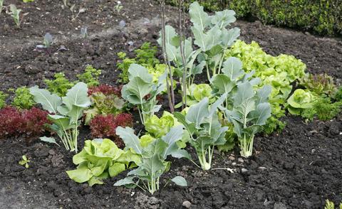 Gemsebeet anlegen pflegen  Mein schner Garten