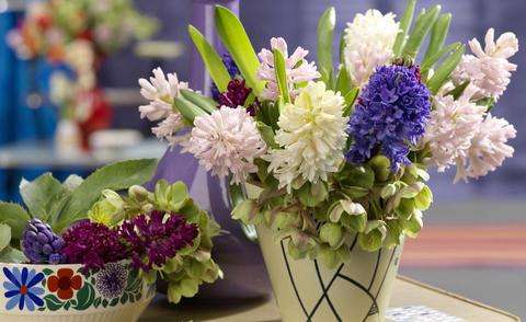 Hyazinthen pflanzen und pflegen  Mein schner Garten