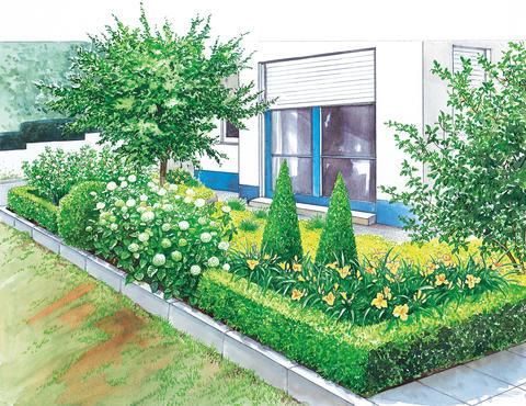 Vorgartenbeet Mit Immergrune Pflanzen