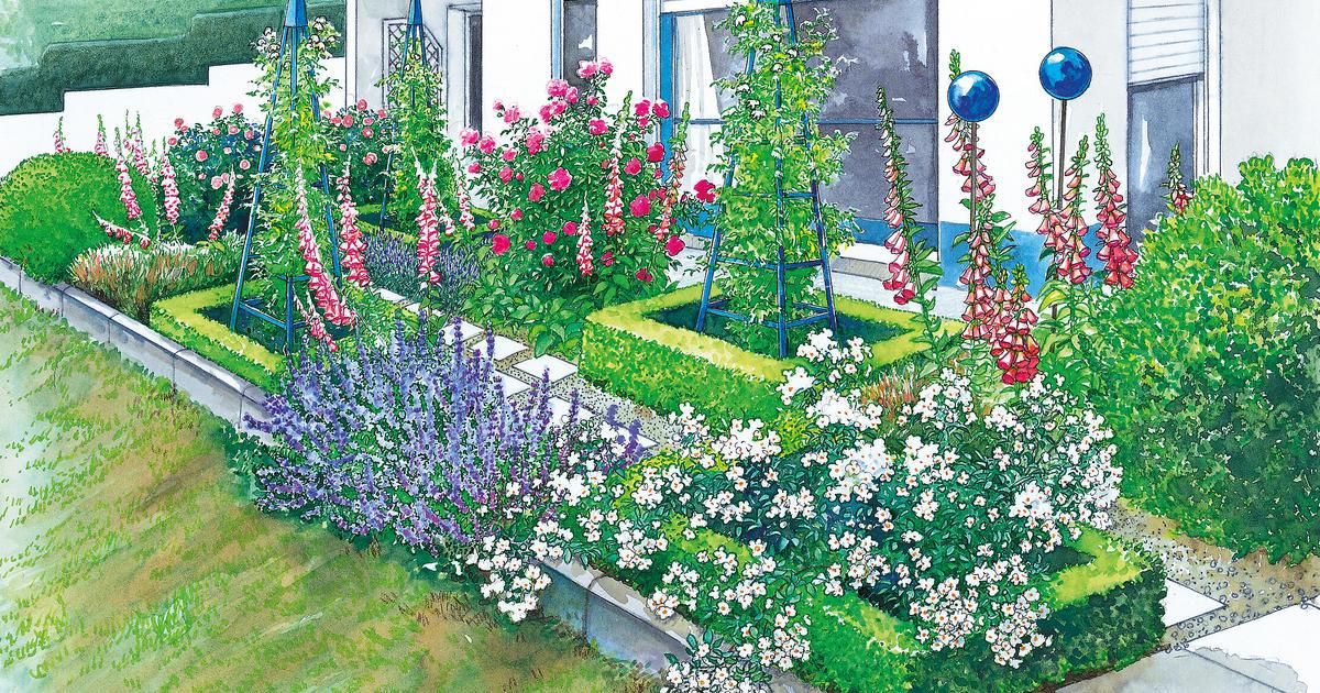 Vorgarten mit Strauchrosen und Hortensien gestalten  Mein