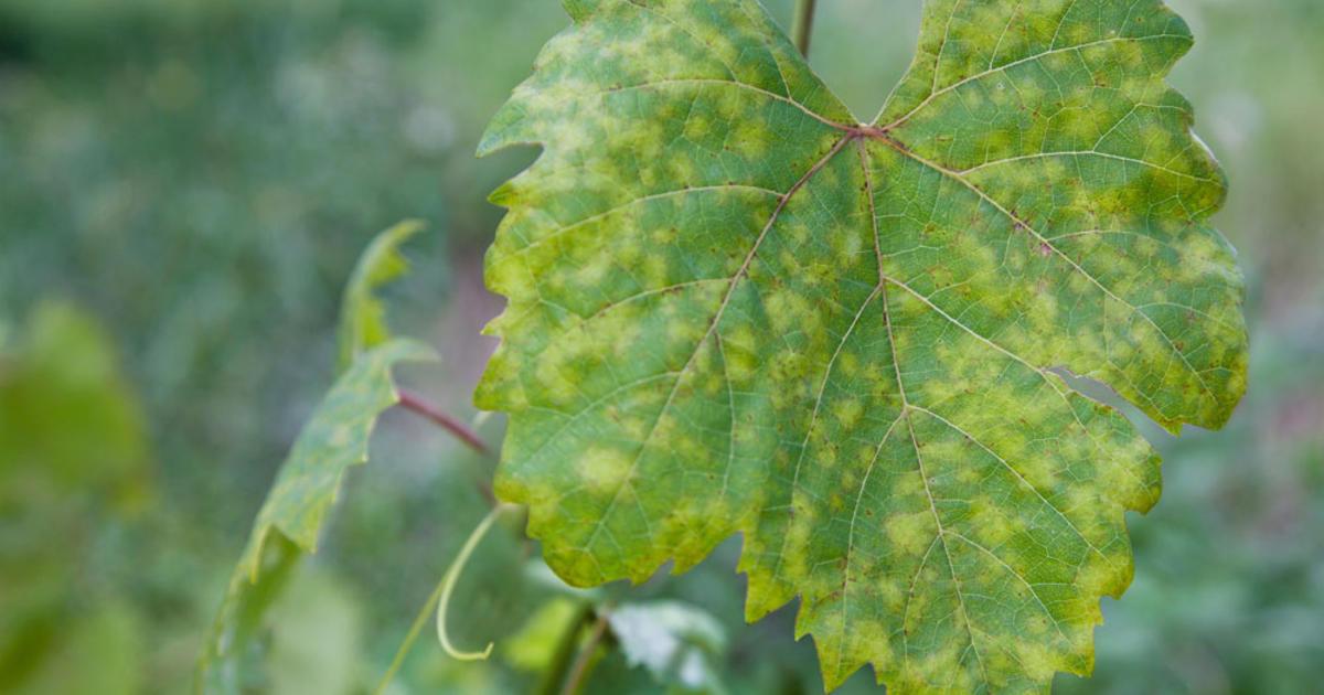 Pflanzenkrankheiten erkennen und bekmpfen  Mein schner
