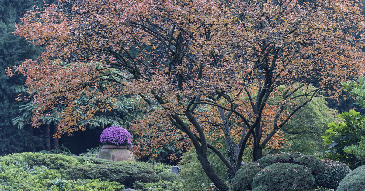 Felsenbirne Pflanzen Pflege Und Tipps Mein Schner Garten