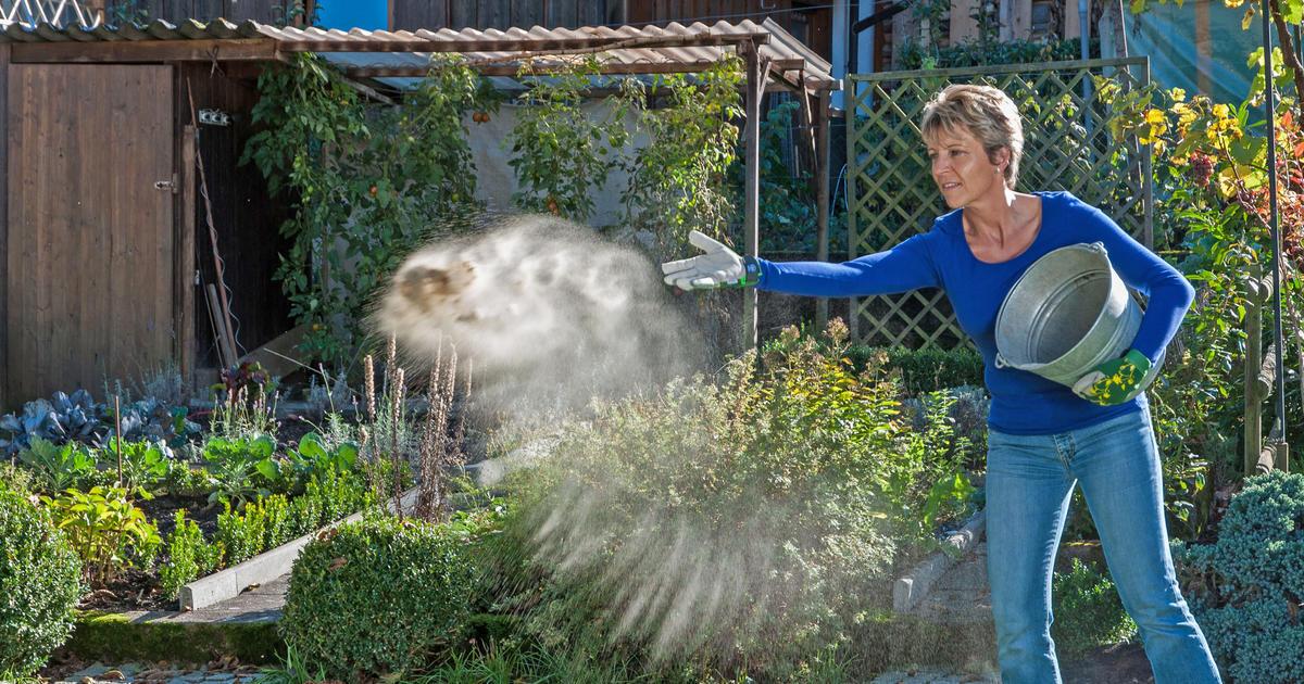 Rasen kalken  Mein schner Garten
