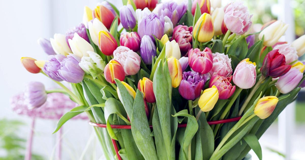 Tulpen fr die Vase richtig anschneiden  Mein schner Garten