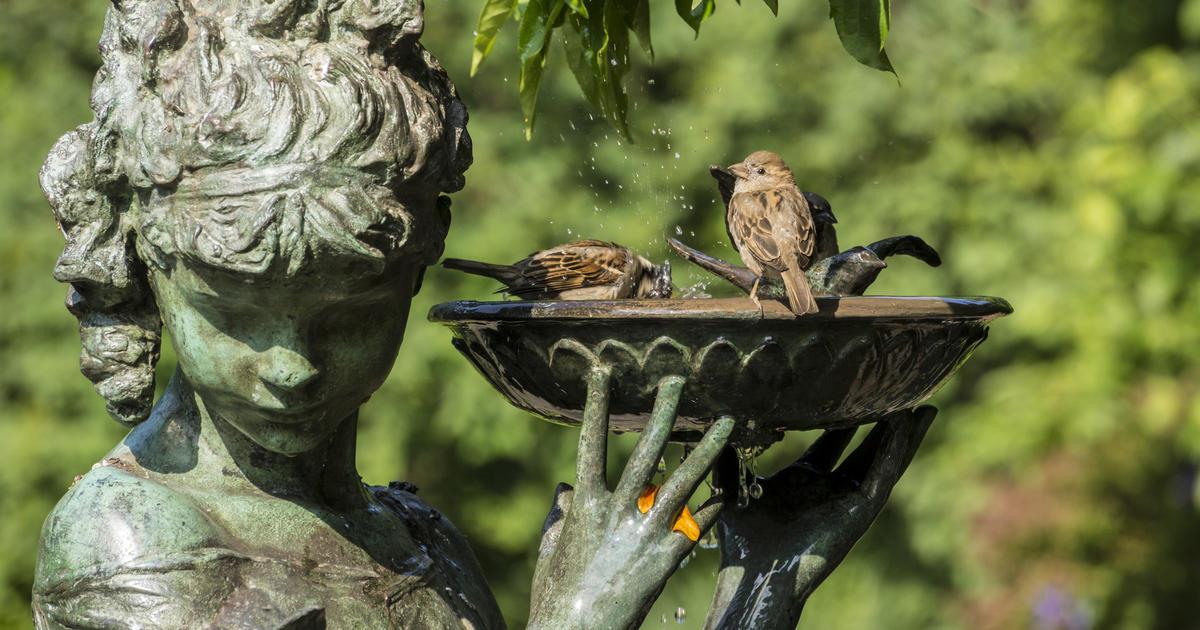 Vogeltrnke fr Garten und Balkon  Mein schner Garten