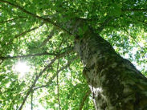 sträucher bilder mit namen bäume und sträucher: die besten arten im porträt