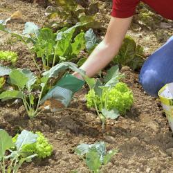 Fruchtfolge Im Gemüsegarten Mein Schöner Garten