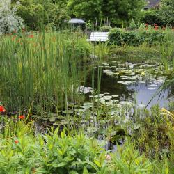 Wasserpflanzen im Teich einsetzen  Mein schner Garten