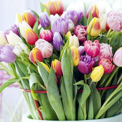 Schnittblumen  Mein schner Garten