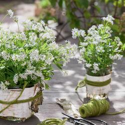 Blumenstrau Schnittblumen haltbar machen  Mein schner Garten