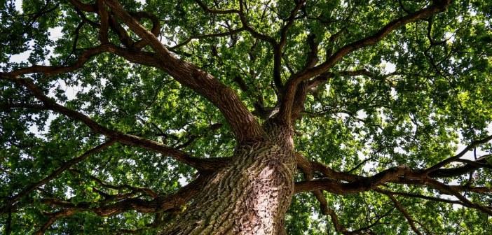 Eichenprozessionsspinner: SPD stellt Antrag für ökologisch verträgliche Gegenmaßnahmen