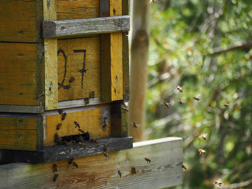 Bienen auf YouTube