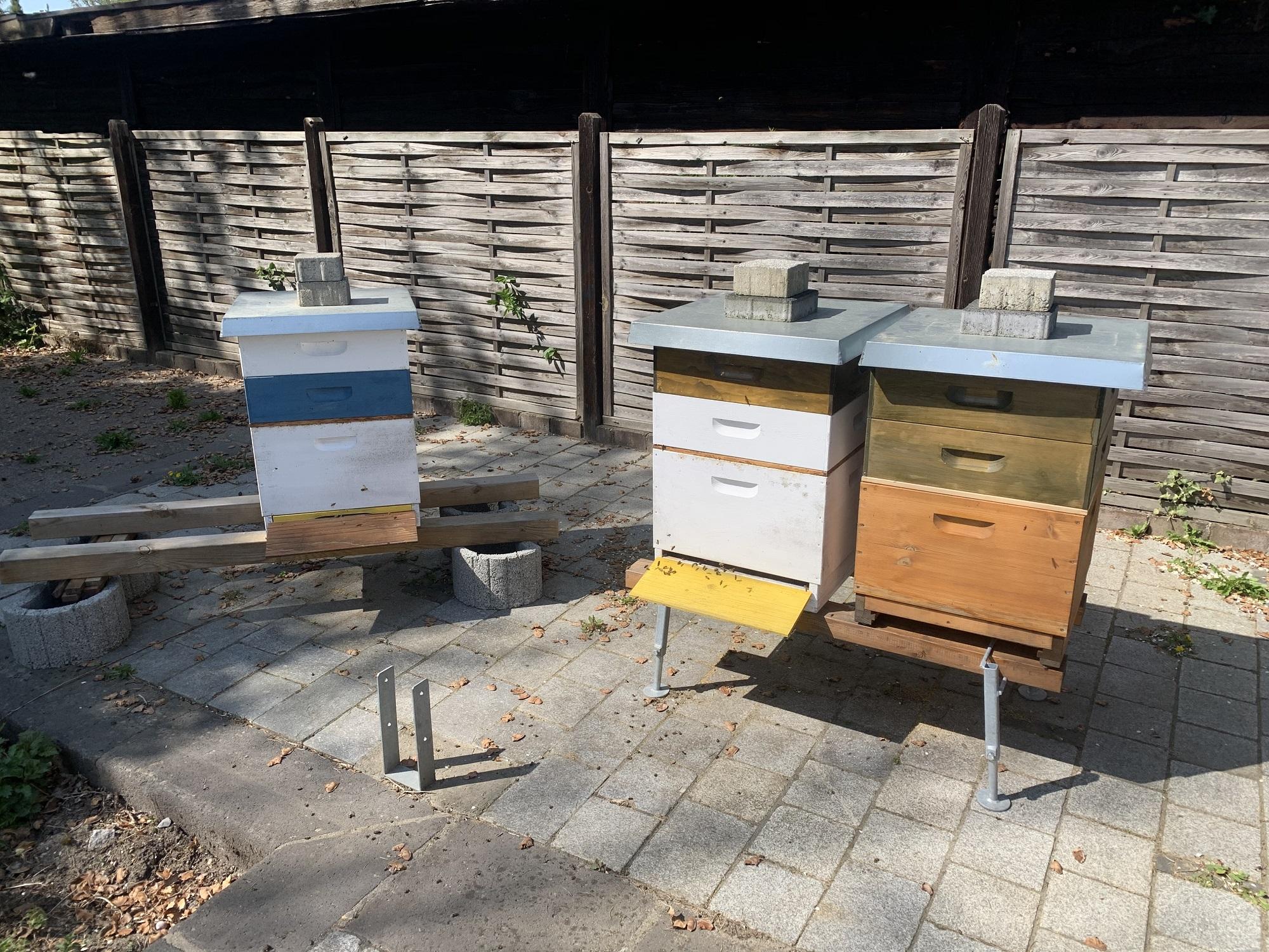 Zweiter Honigraum Dadant April 2020