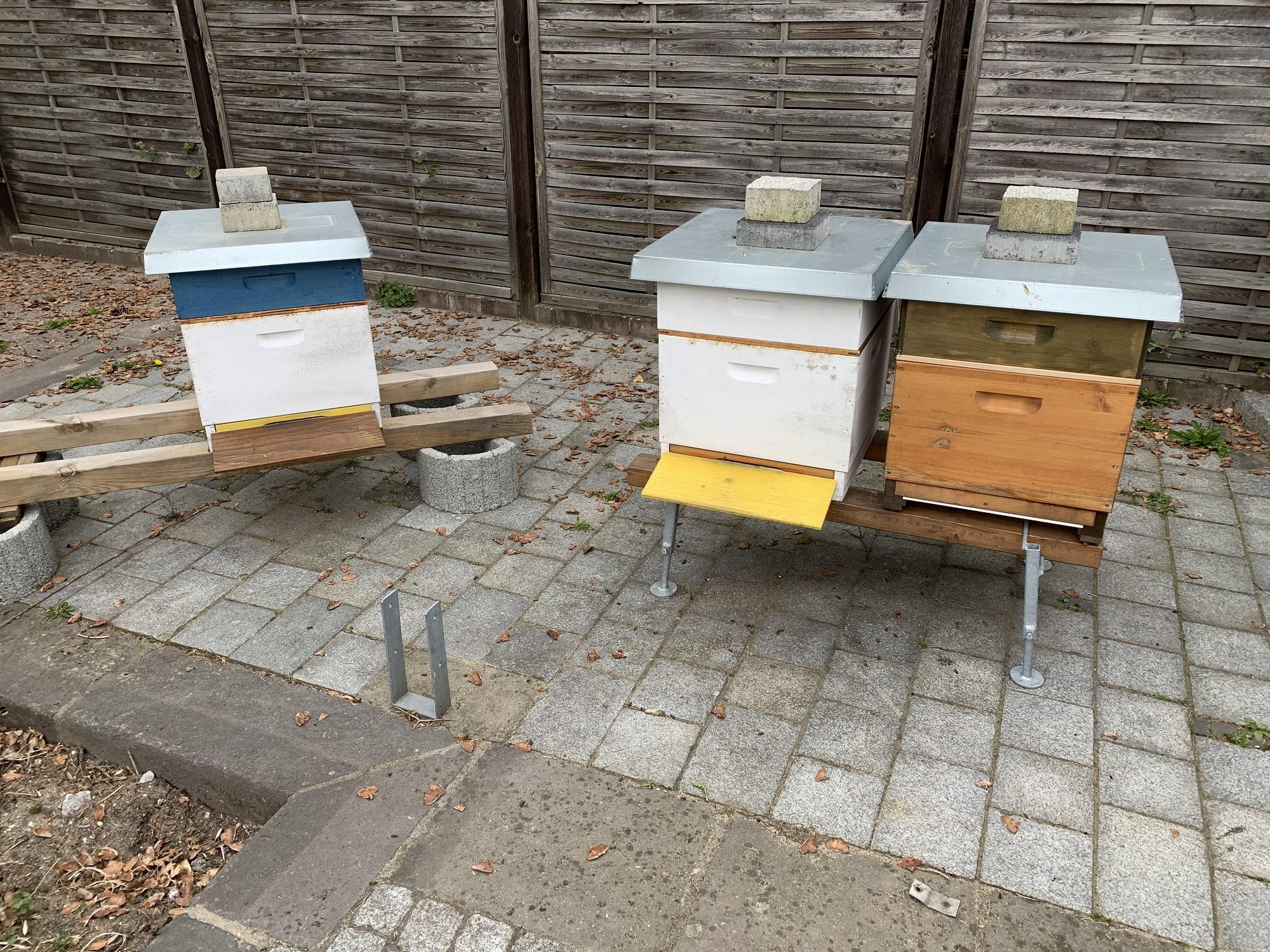 die ersten Honigräume 2020 Bild