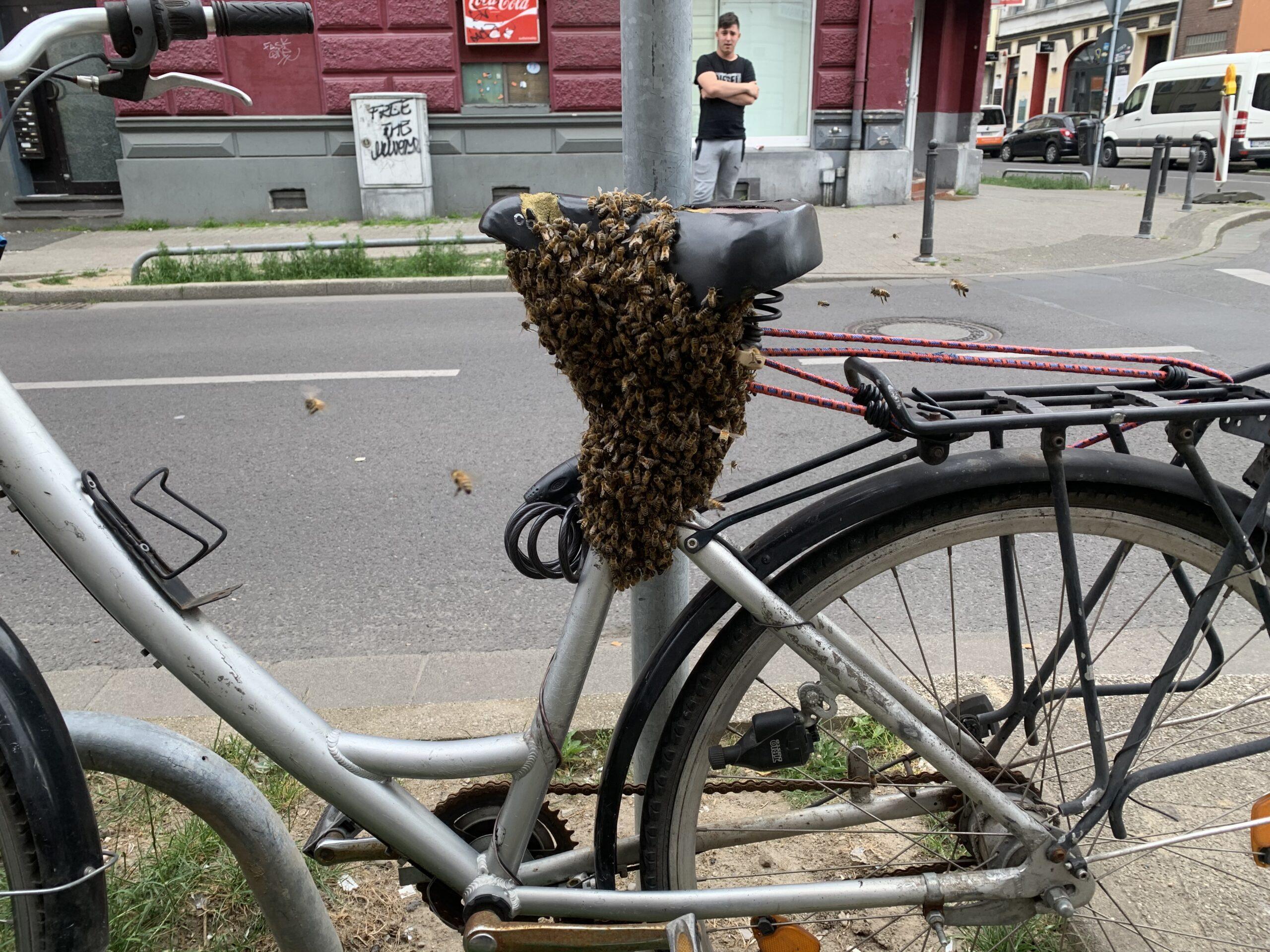 Bienenschwarm in Krefeld Fahrrad
