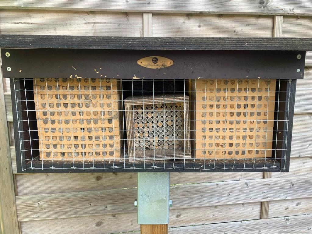 Mauerbienen im Mai Bild 2