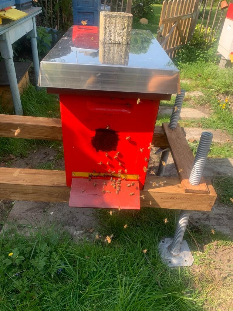 Volk 6 Annea mit Brutwabe und Bienen unterstützen