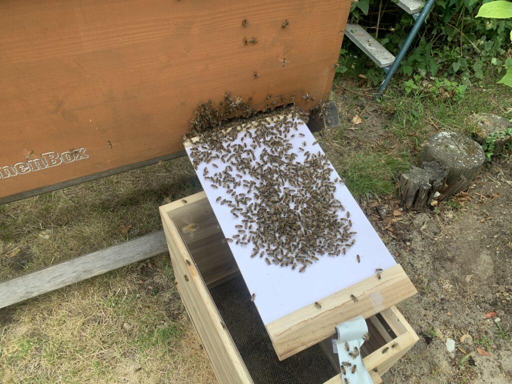 Schwarm Bienenbox einlaufen