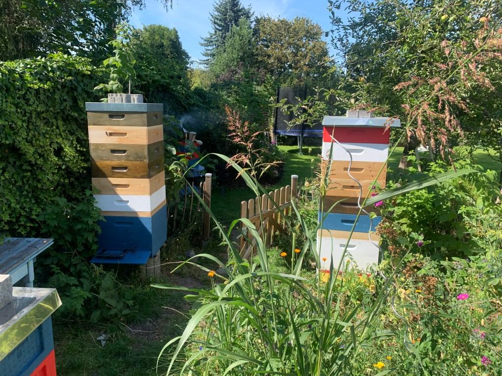 Honigräume ausschlecken lassen