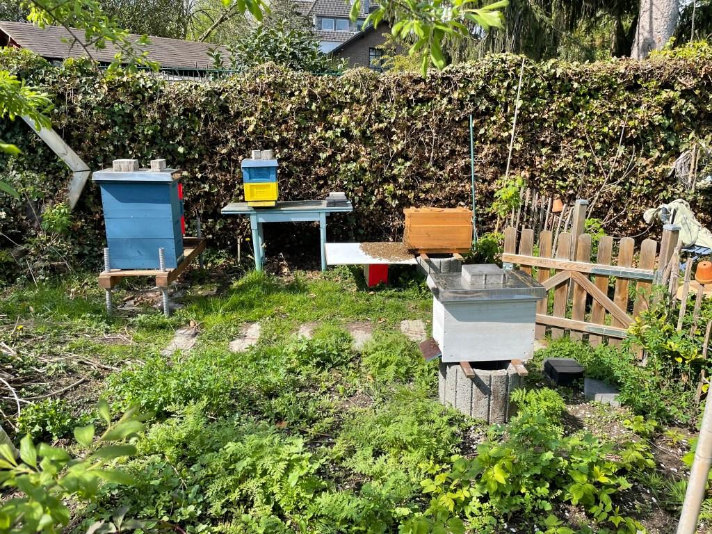 Bienenstand beim Einlaufen des zweiten Schwarms