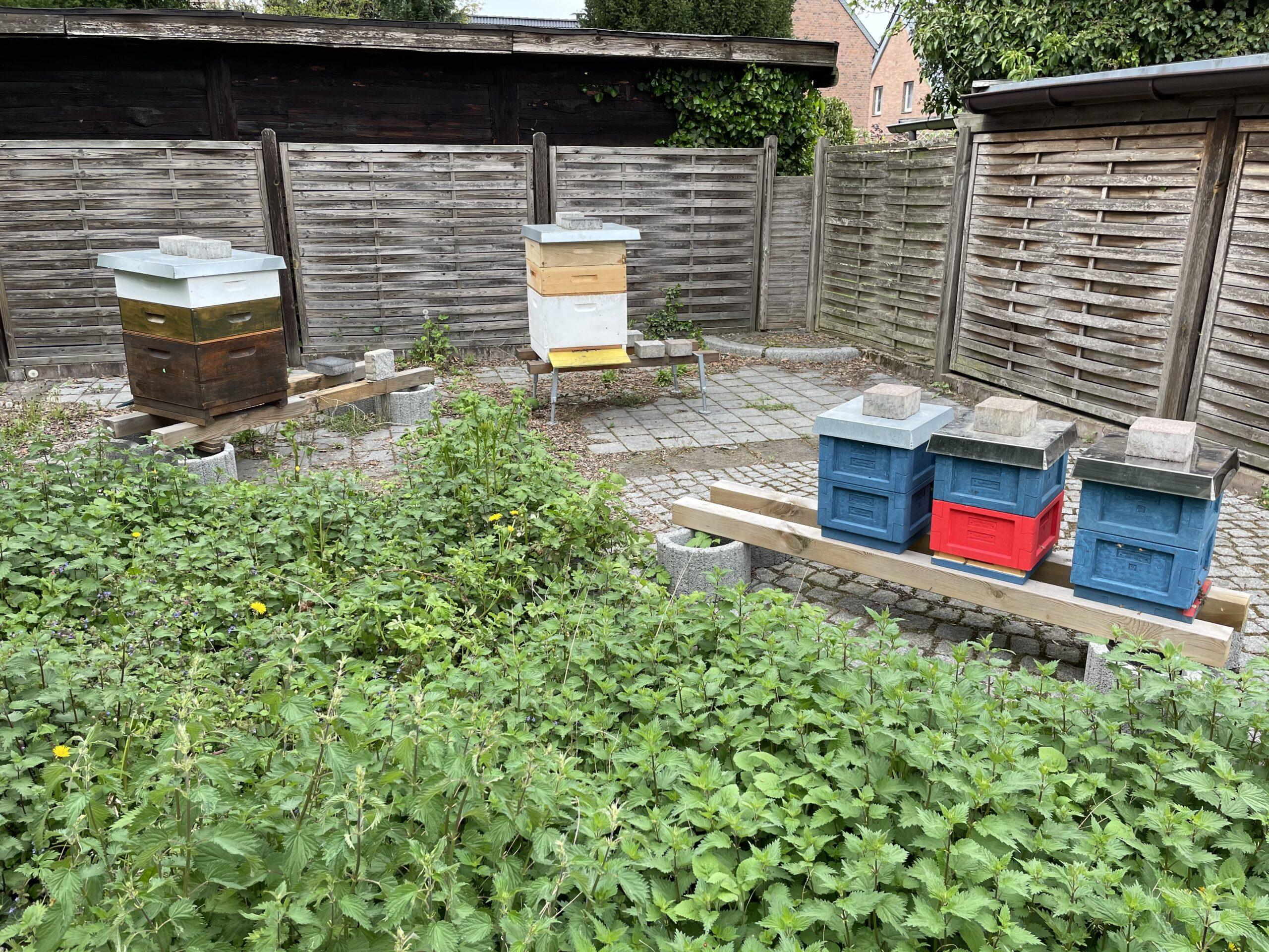 Bild nach der Völkervermehrung vom Bienenstand 2