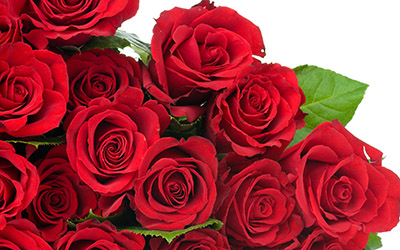 rose-flower-wallpaper-free_2560x1600_83163