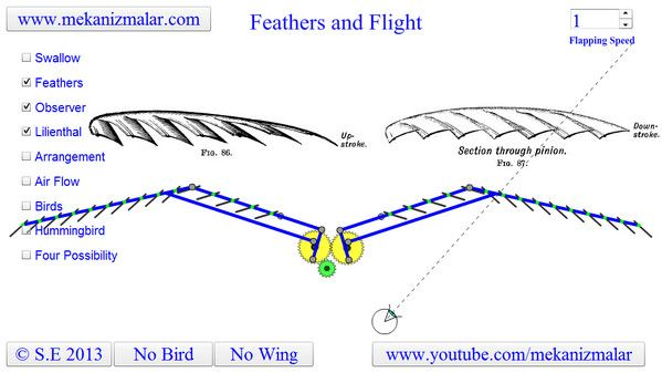 duck wing diagram carrier furnace wiring duck's km anistory :: [ani ref] feathers and flight - how the work during flapping?