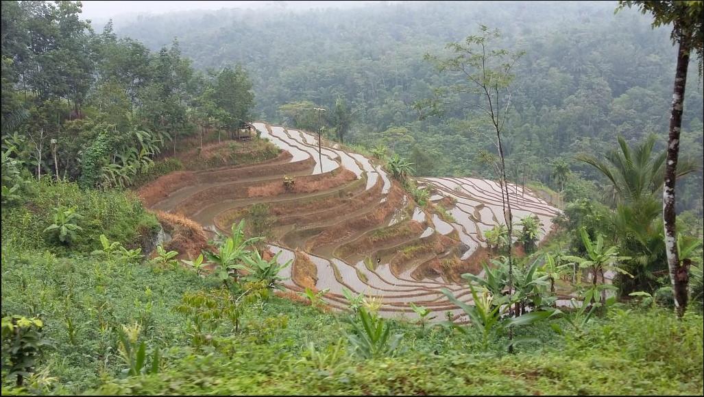 Potensi yang ada di Desa Mekarmulya