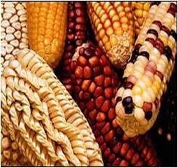 Pertanian: Bioteknologi