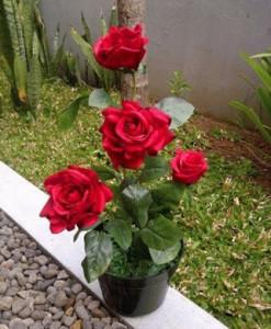 4 Cara Menanam Mawar dengan Cangkok Bagi Pemula   Artikel Pertanian
