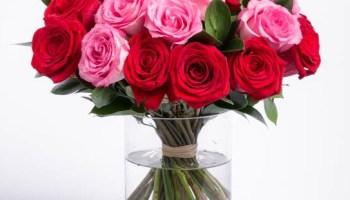 Tanaman Bunga Mawar Merah Disilangkan Dengan Tanaman Bunga Mawar Putih Berbagi Tanam